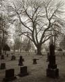 winter, maple, graveyard, tombstone, cemetery, Olympia