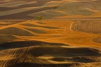 harvest, Palouse, eastern Washington, Washington, gold