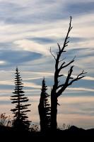 silhouettes, Mount Rainier National Park, Washington, cirrus