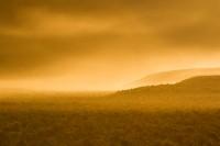 sunrise, gold, dust, Moses Coulee, sagebrush, Washington