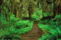 Hoh Rainforest, Olympic National Park, Washington, old-growth forest, trail