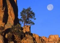 Joshua Tree National Park, full moon