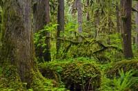 old-growth forest, Carbon River, Mount Rainier National Park, logs, amphibians