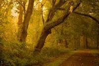 Nisqually Wildlife Refuge, Washington, sunrise, golden