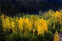 autumn, gold, Nisqually, Mount Rainier National Park, Washington, sunrise