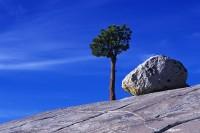 Olmstead Point, Yosemite National Park, California, granite boulder, pine