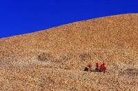Joshua Tree National Park, California, red flowers, granite