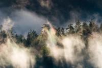 old-growth forest, Carbon River, Mount Rainier National Park, fog, rainbow