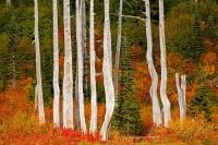 snags, Snow Lake, Mount Rainier National Park, Washington, autumn, alpine fir