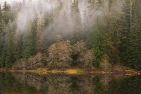 Spider Lake, Olympic National Forest, Olympic Peninsula, Washington, fog, conifers