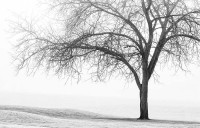 winter, tree, winter tree, fog, golf course, grace
