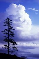 Cannon Beach, Ecola State Park, Oregon Coast, cumulus clouds, silhouette, Rolleiflex