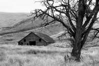 barn, homestead, Walla Walla County, black-and-white