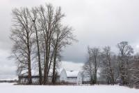 Nisqually Wildlife Refuge, Washington, barns, snow, cottonwood, eagle nest