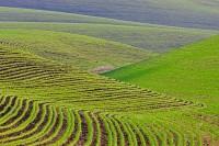 hills, abstract, green, Walla Walla, Washington
