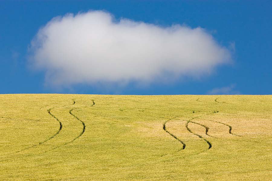 wheat, tracks, cloud, Walla Walla, Washington