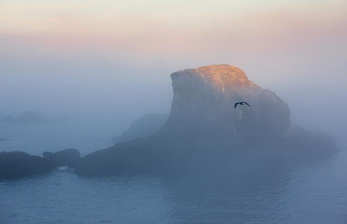 Cape Flattery, Washington Coast, seabirds, gull, sunrise, off-shore rock