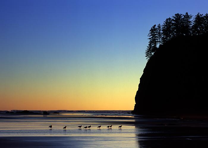 Second Beach, Olympic National Park, Washington Coast, sunset, Crying-Lady Rock, gulls