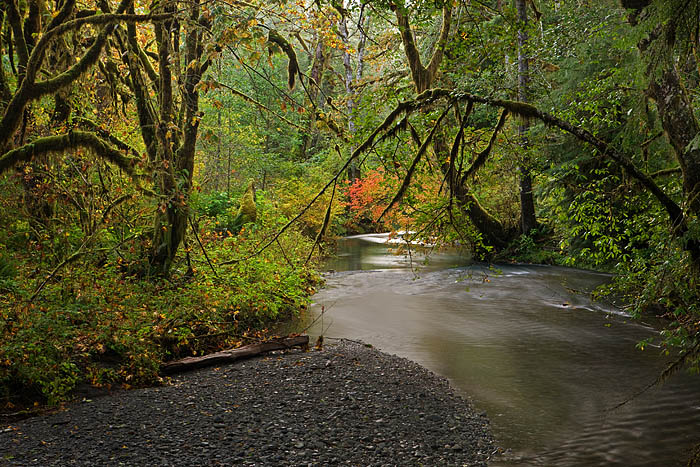 Lake Ozette, Olympic National Forest, Washington, stream, red, maples, forests