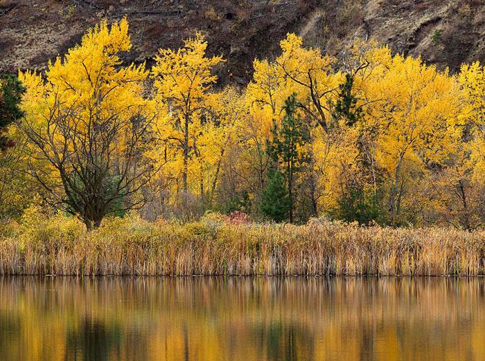 autumn, reflection, pond, Tucannon, river, Columbia County, Dayton, Washington, cottonwood, riparian, November