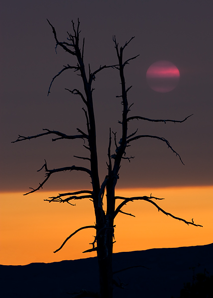 red sun, snag, McKenzie Pass, Highway 242, Oregon, smoke, forest fires, sunset