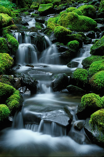 stream, Sol Duc Falls, Olympic National Park, Washington, moss