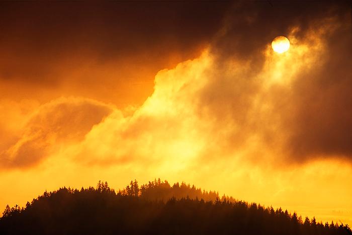 sunrise, Capitol Forest, Olympia, Washington, yellow, sun, fog, mountain