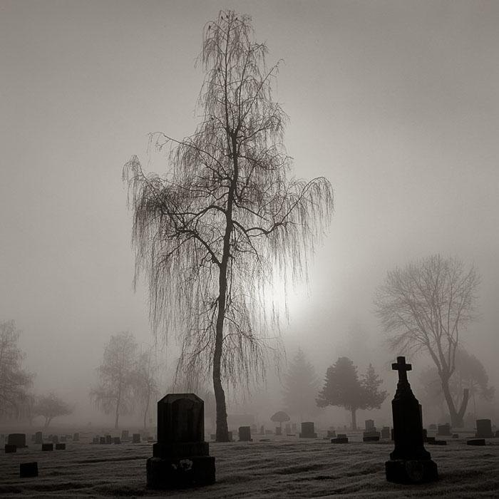 birch, cemetery, Olympia, fog, sunrise