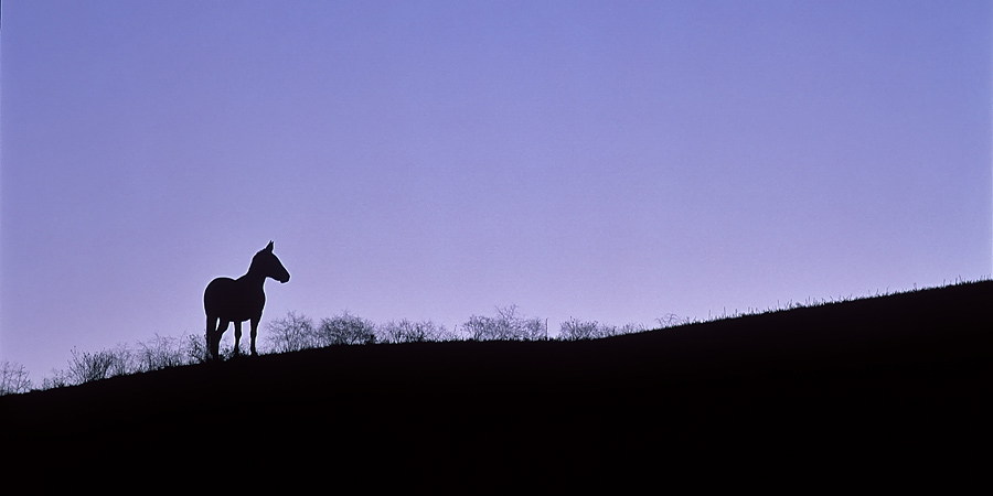 silhouette, horse, Walla Walla, Washington